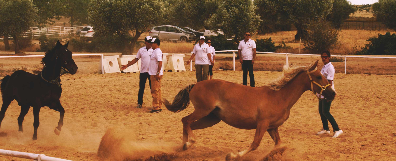 Biel-mcmillan-coaching-asistido-caballos2